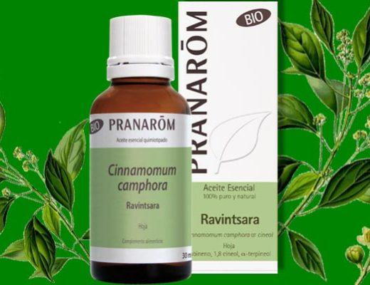 usos y propiedades del aceite esencial de ravintsara