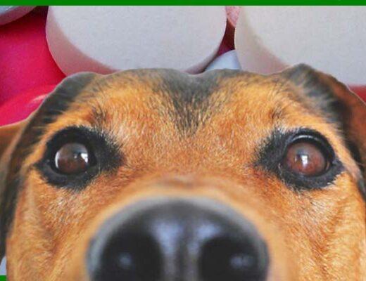 dar paracetamol a perros